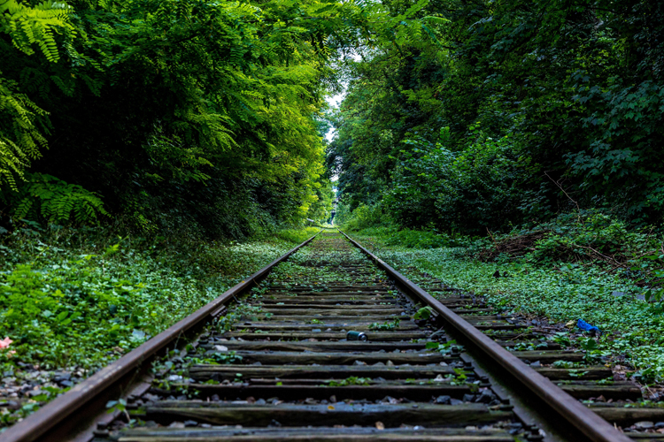 Freight Railroad tracks in woods